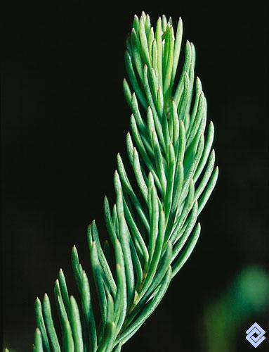 Banco de occidente diversas especies de hierbas y - Especies de arbustos ...